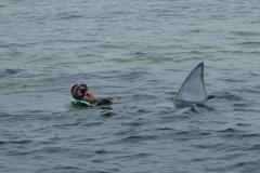 Nuyts & Baird Bay shark shoot.